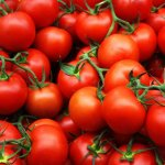 Tomato Vine Fragrance Oil