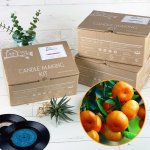 Soy Wax Lime Basil & Mandarin Candle Making Kit