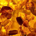 Baltic Amber & Clove Fragrance Oil