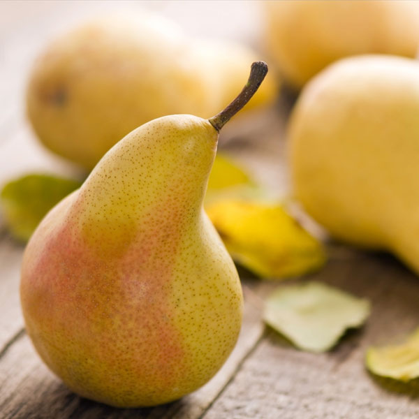 French Pear Fragrance Oil : Cosy Owl, Candle Making Supplies & Soap Making  | Craft Supplies Specialists