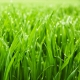 Fresh Cut Grass Fragrance Oil